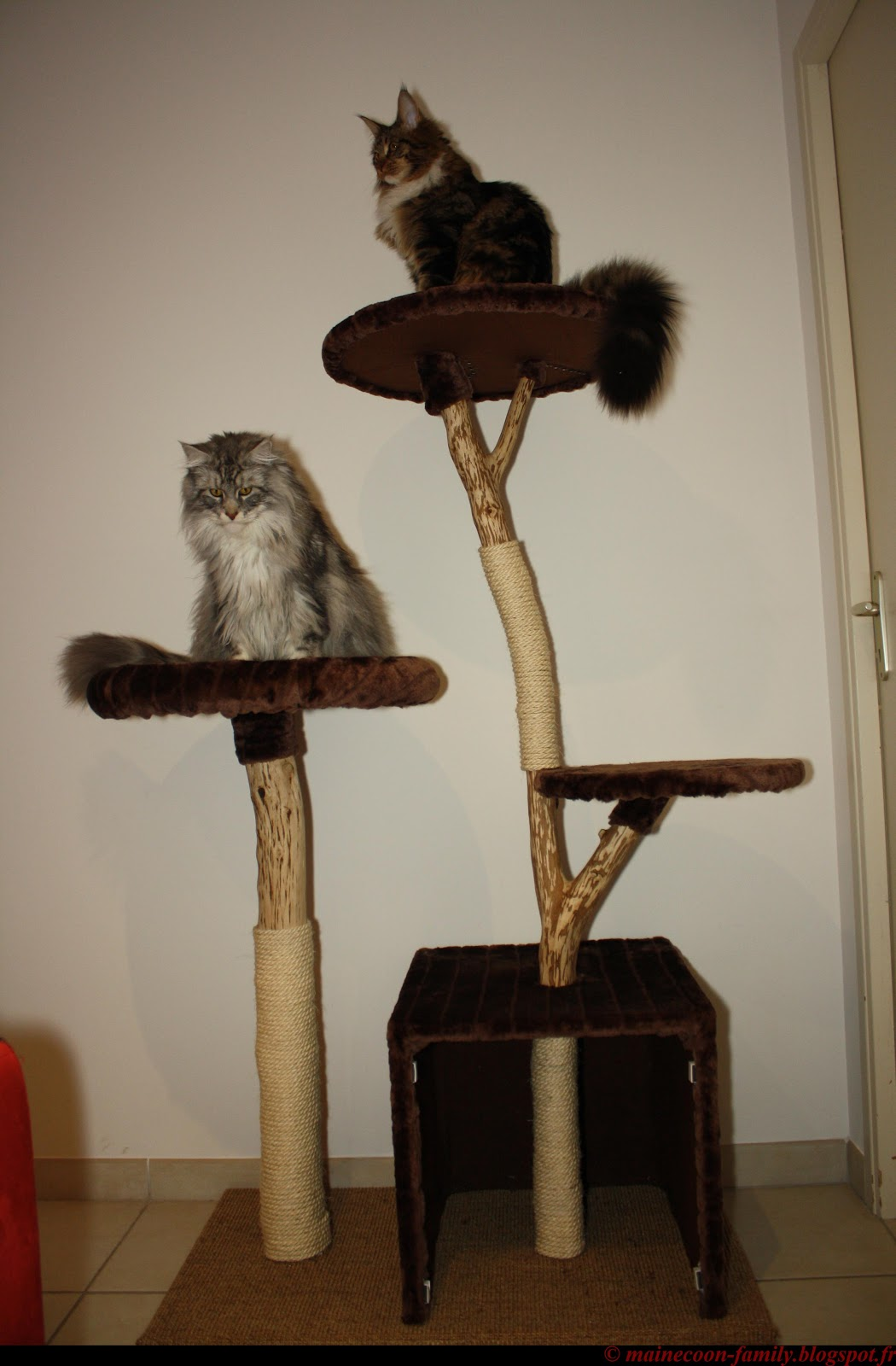 quel arbre chat choisir pour son maine coon. Black Bedroom Furniture Sets. Home Design Ideas